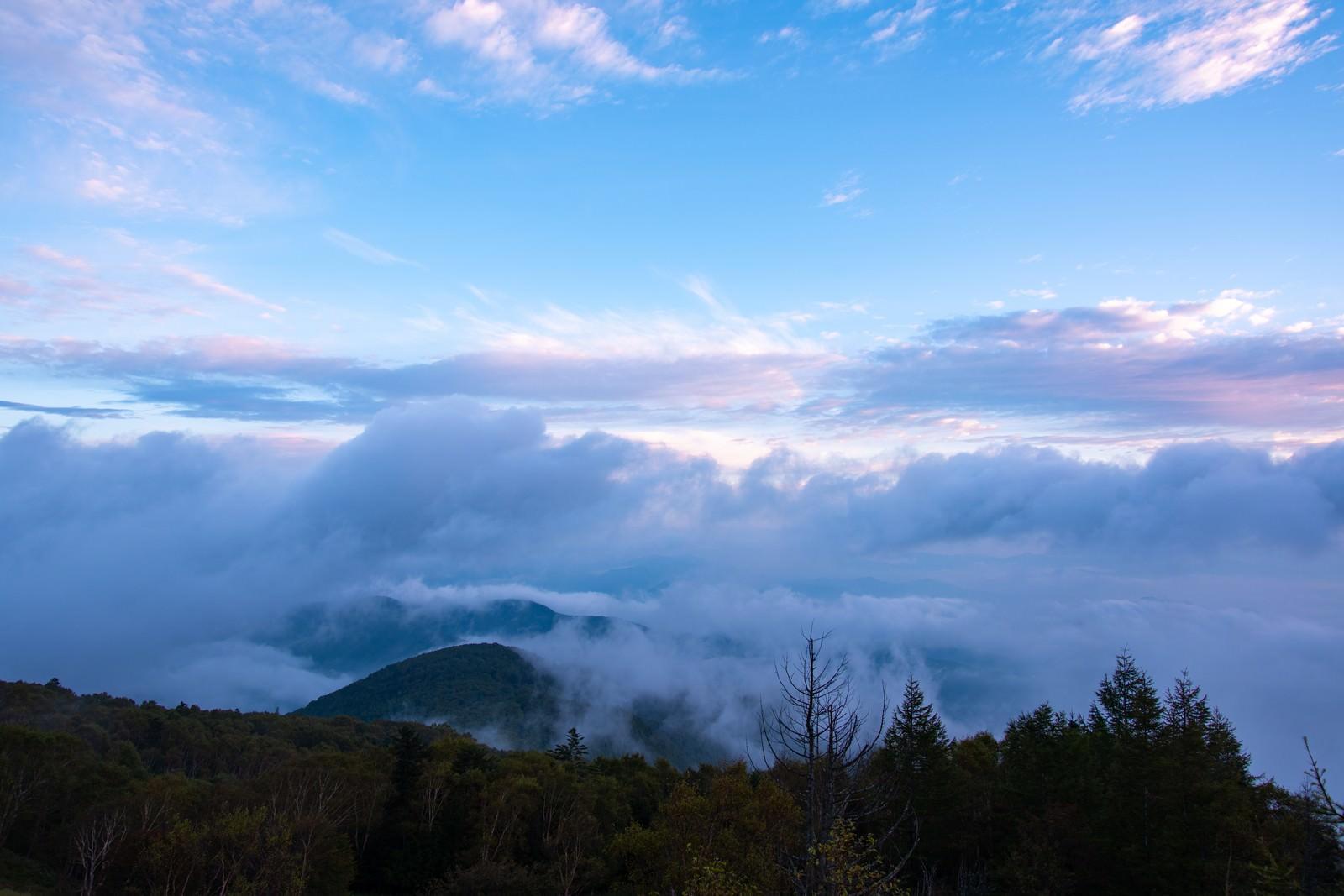 「美ヶ原の夜明けの雲海」の写真