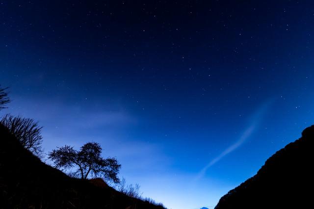 余里の夜空と木々のシルエットの写真