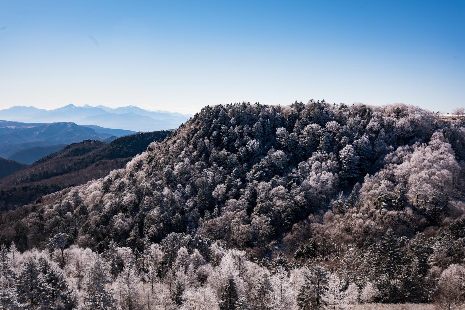 「美ヶ原から見る樹氷」の写真