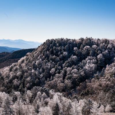 美ヶ原から見る樹氷の写真
