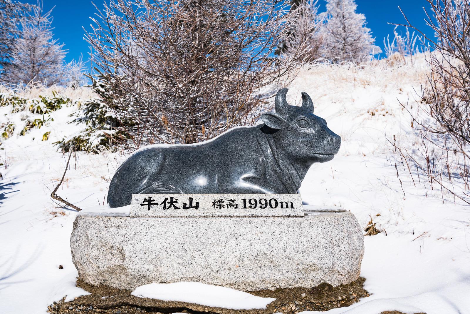 「牛伏山頂上付近にある牛像の案内(美ヶ原)」の写真