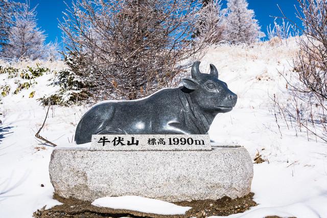 牛伏山頂上付近にある牛像の案内(美ヶ原)の写真