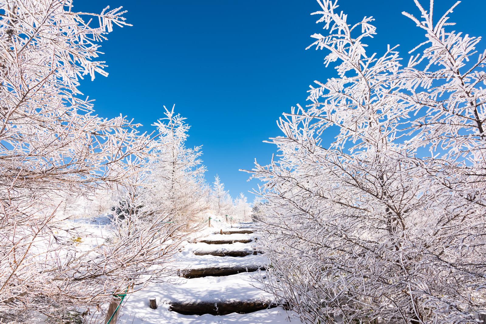 「美ヶ原牛伏山の樹氷に囲まれた登山道」の写真