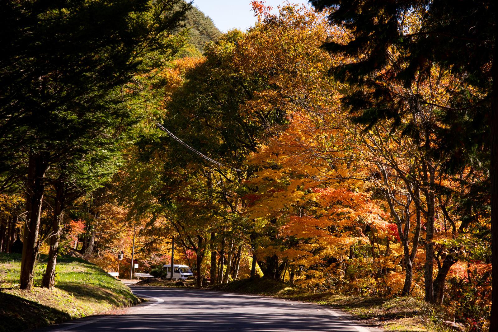 「道路沿いに彩るもみじ橋の紅葉」の写真