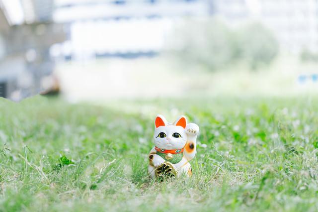 幸運の招き猫の写真