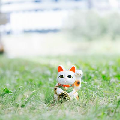 「幸運の招き猫」の写真素材
