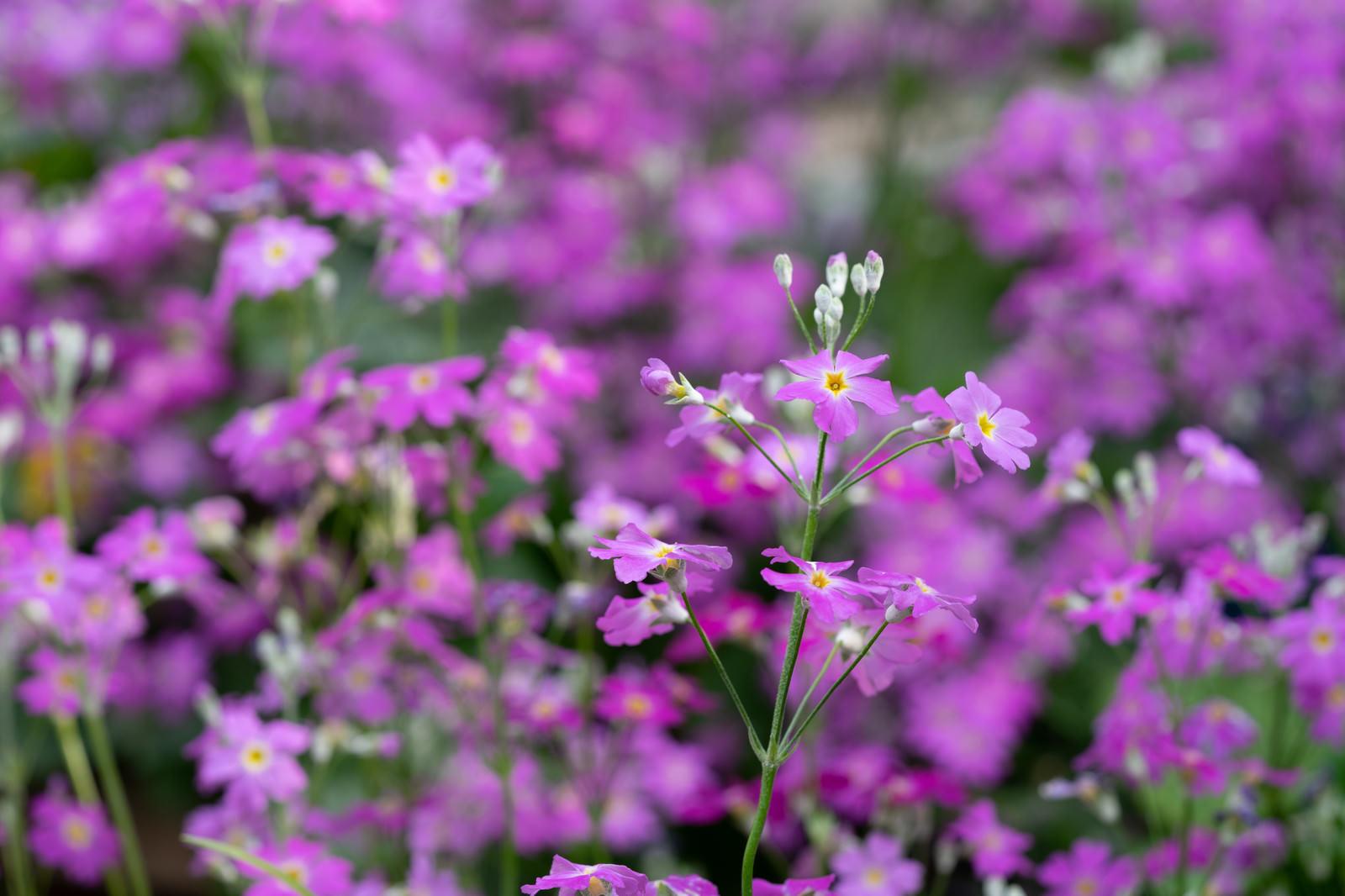 「野に咲く花」の写真