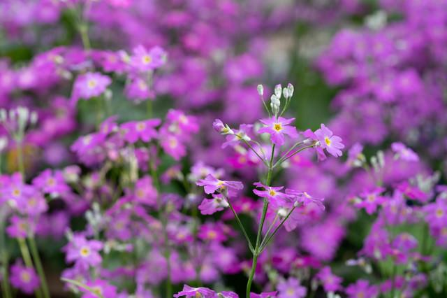 野に咲く花の写真
