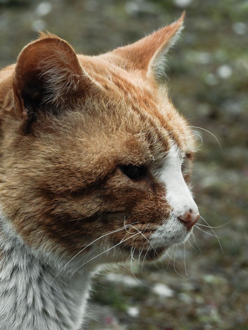 「佇む野良猫」の写真