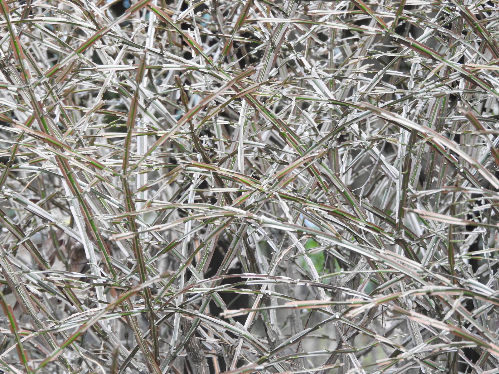 「立ち枯れた植物の草むら」の写真