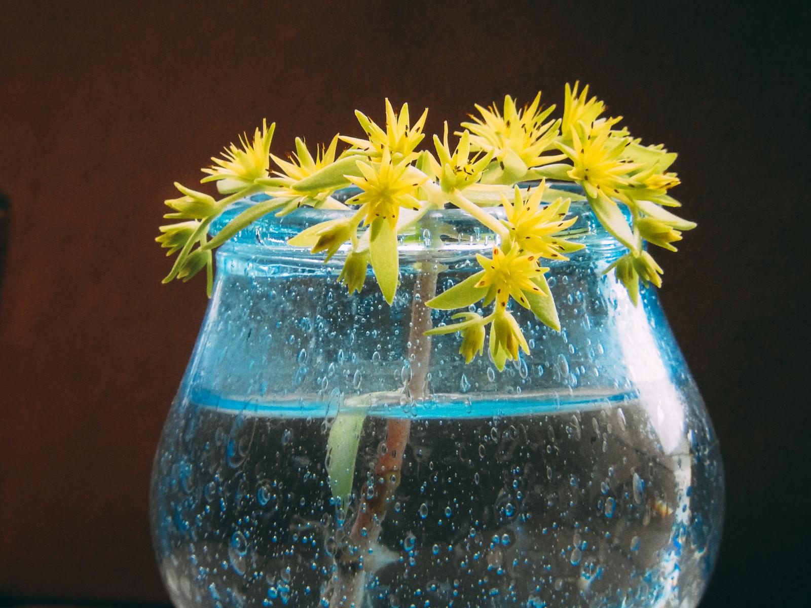 「水上鉢からひょっこり出てきた万年草(セダム)」の写真