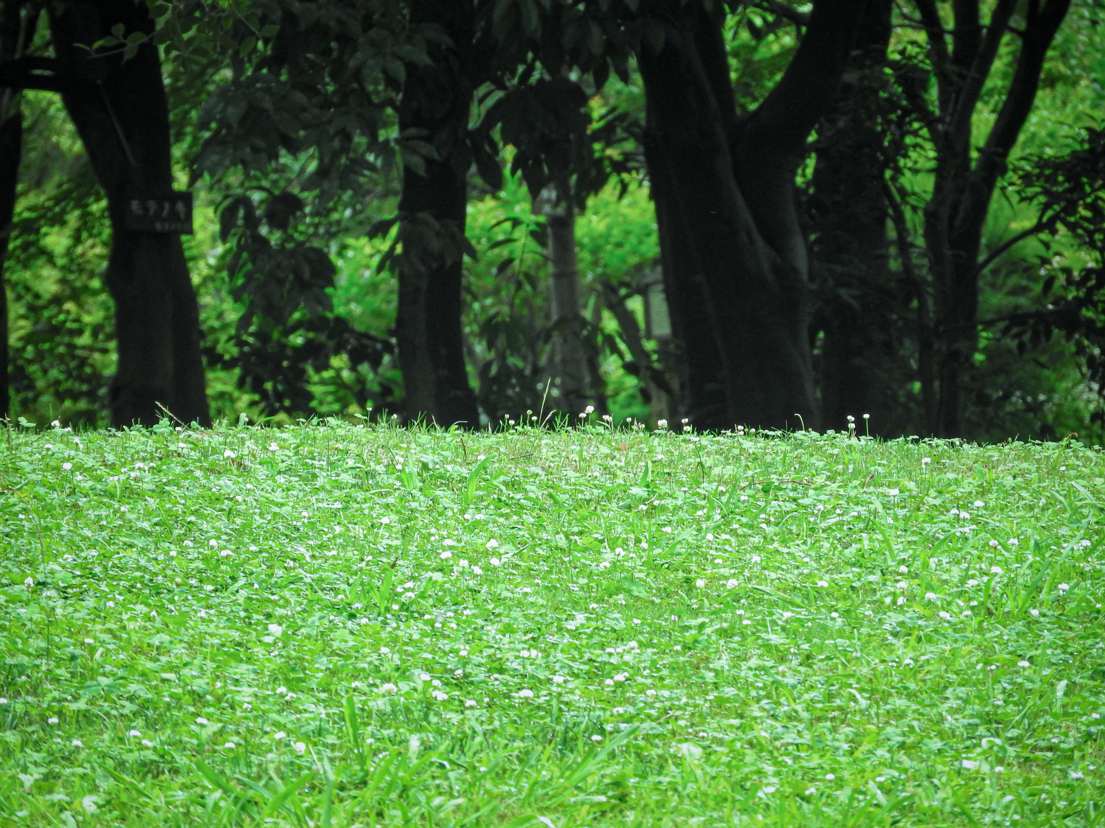 「クローバーの庭」の写真