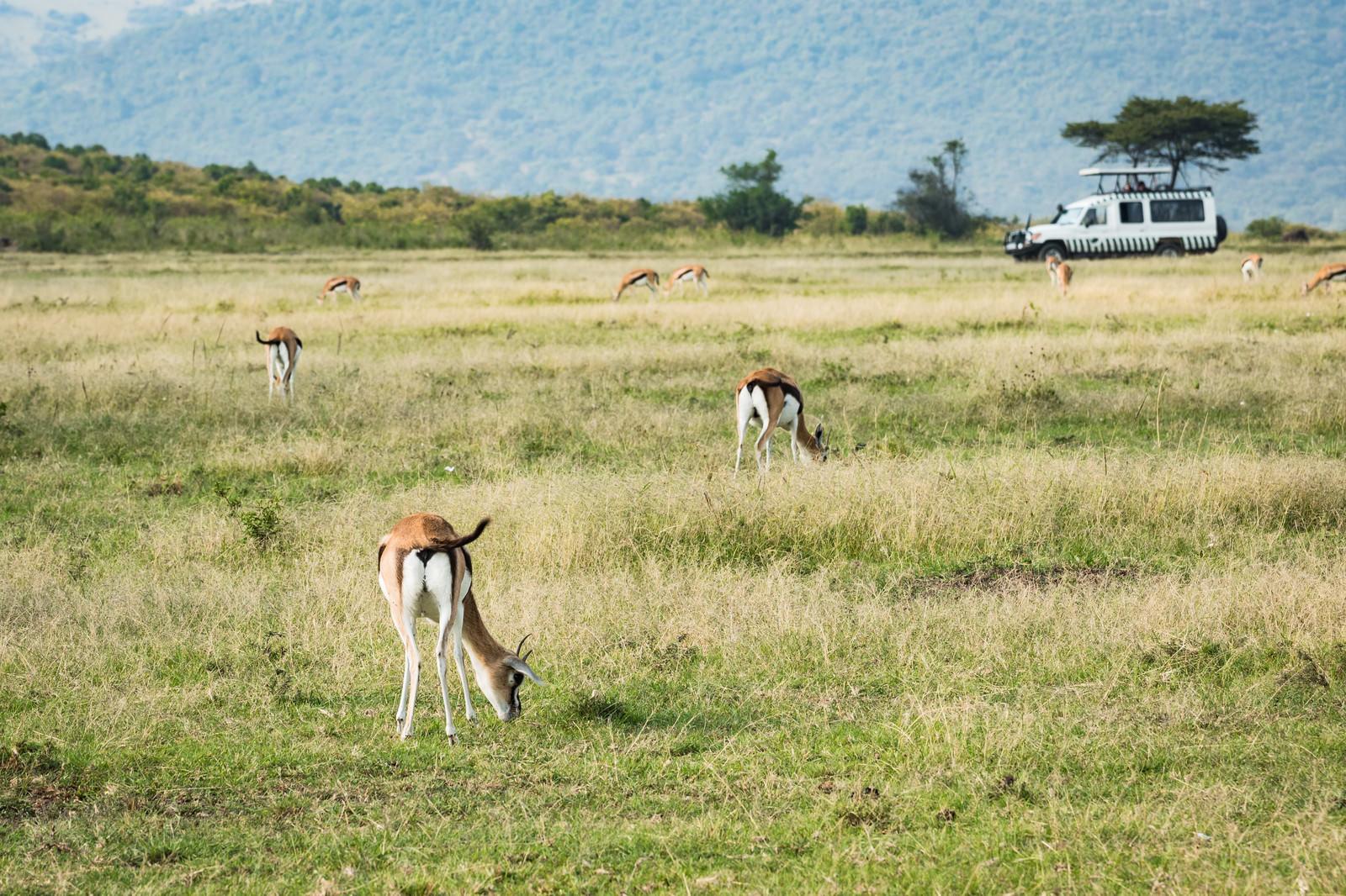 「サファリツアーで見る野生の動物の群れ」の写真
