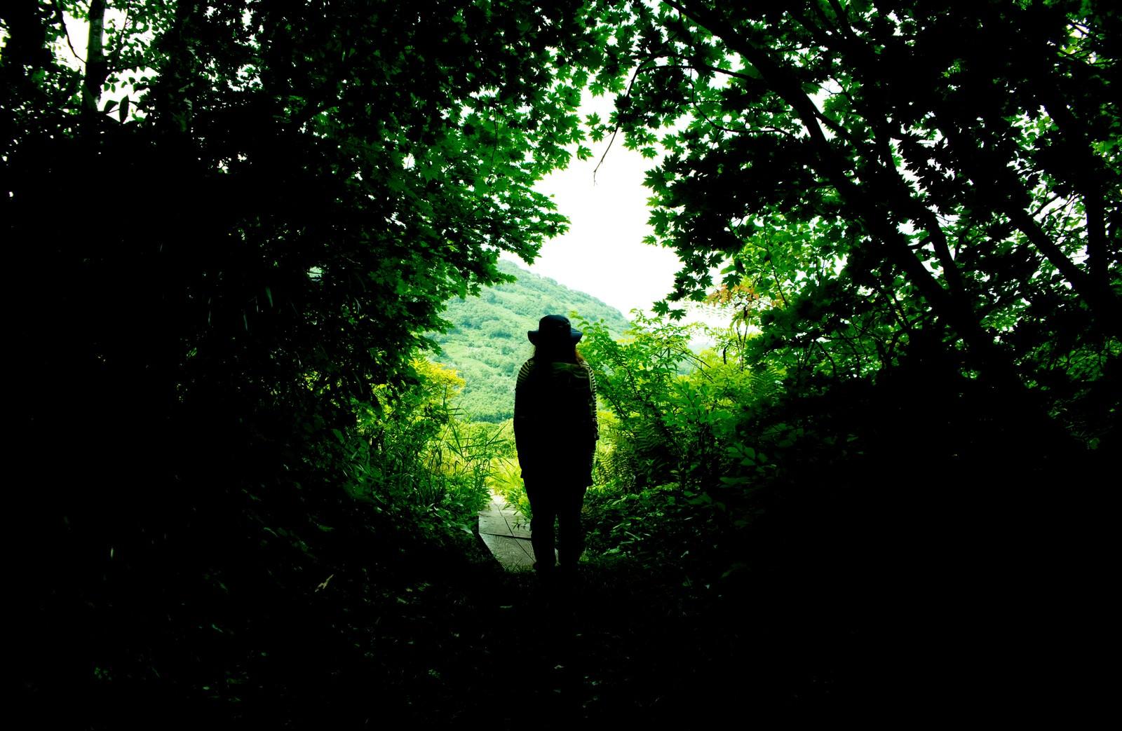 「緑に覆われた山道と人の後ろ姿」の写真