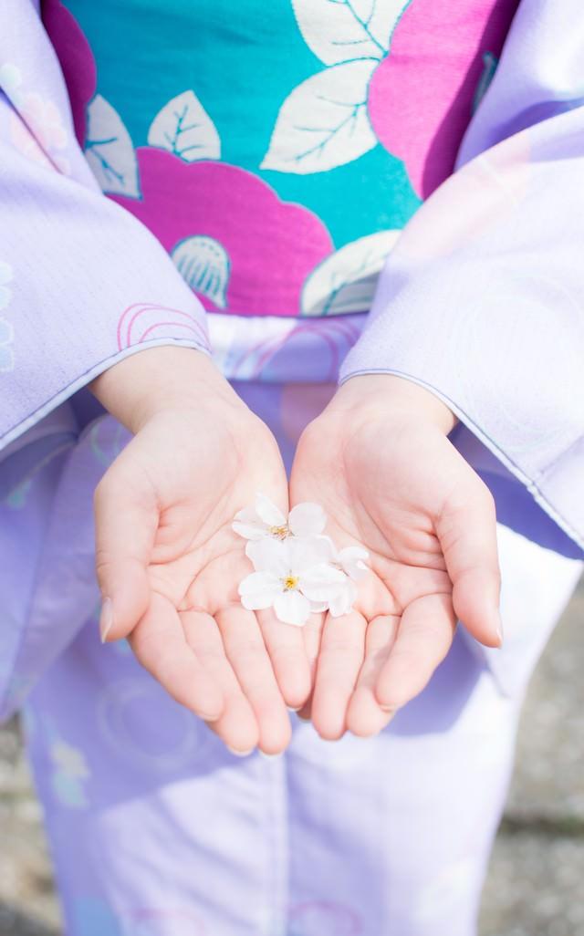 桜の花弁を両手で掬う着物の女性の写真