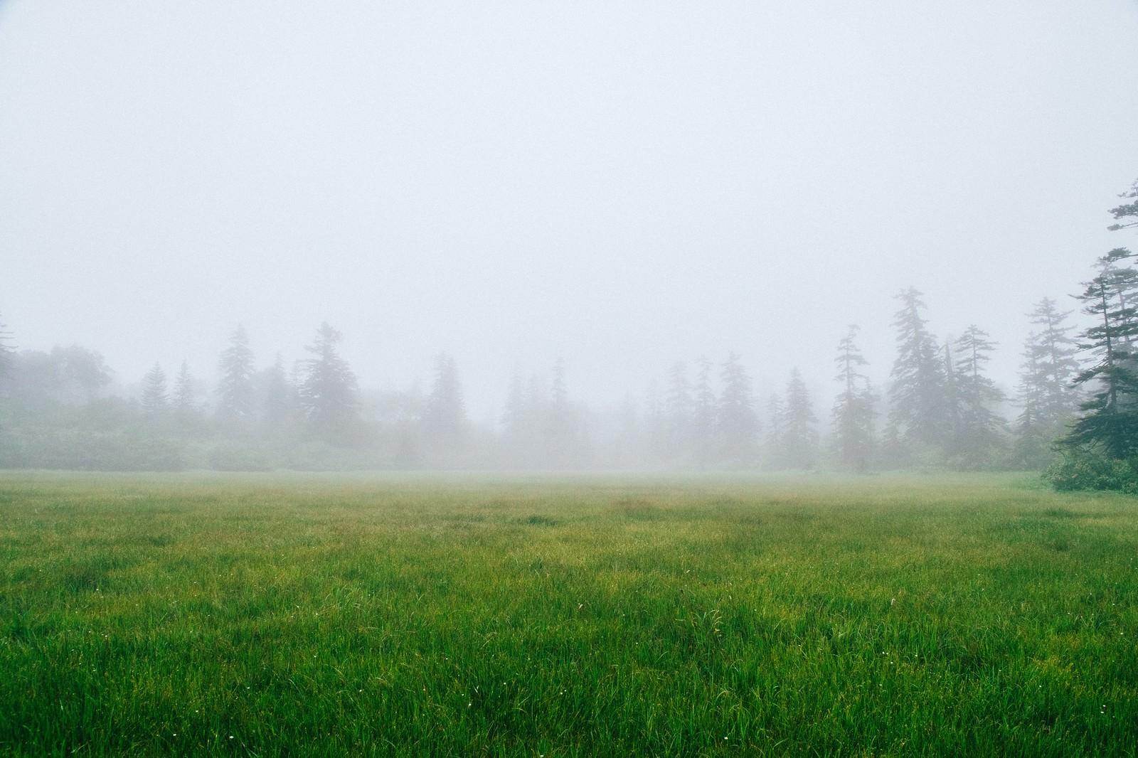 「霧に覆われた森の中の草原」の写真