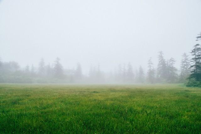 霧に覆われた森の中の草原の写真