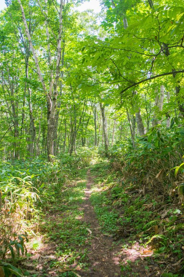 新緑の散歩コースの写真