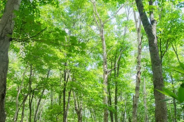 木漏れ日の森の写真