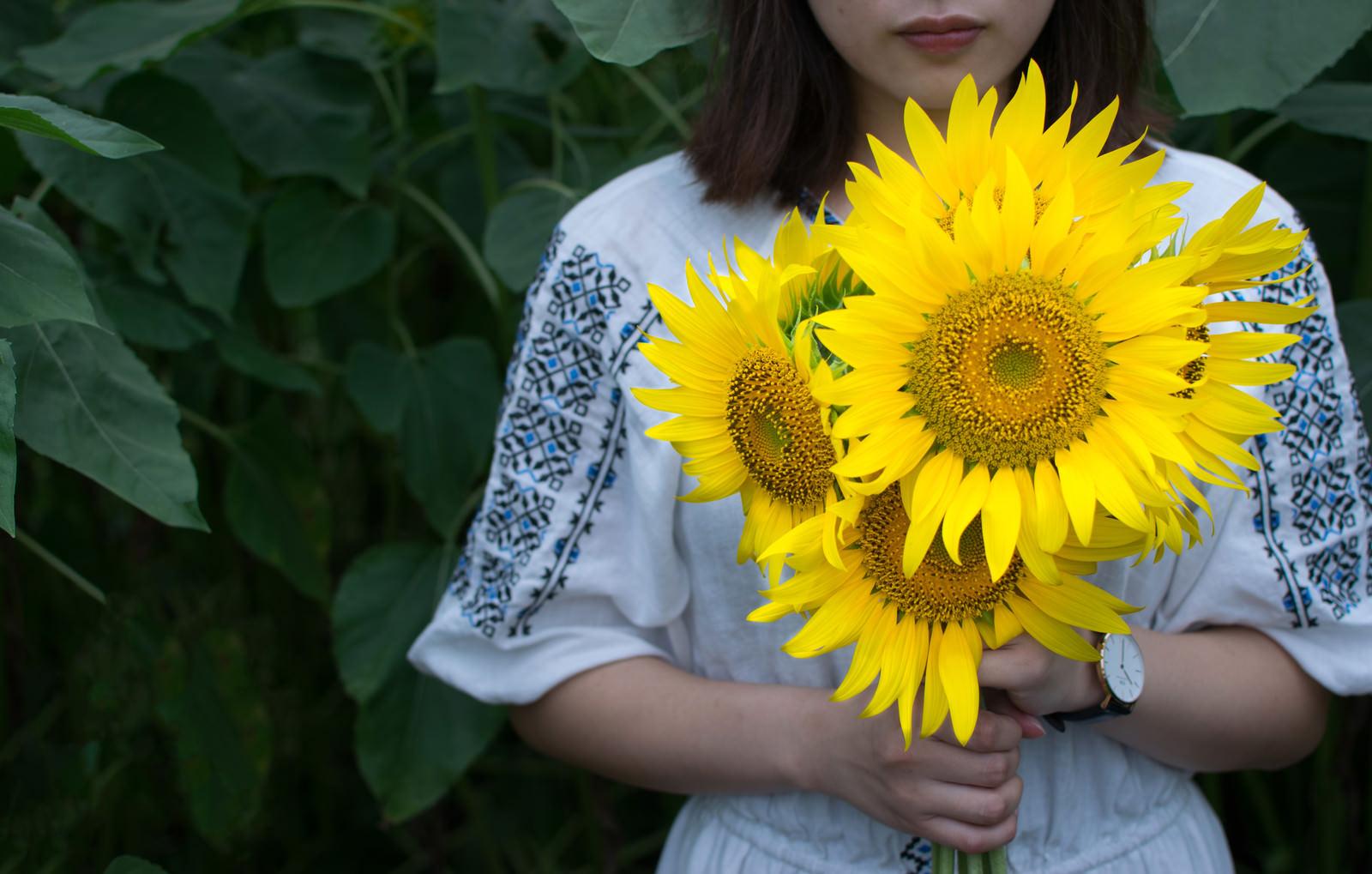「両手いっぱいの向日葵を持つ女性両手いっぱいの向日葵を持つ女性」のフリー写真素材を拡大
