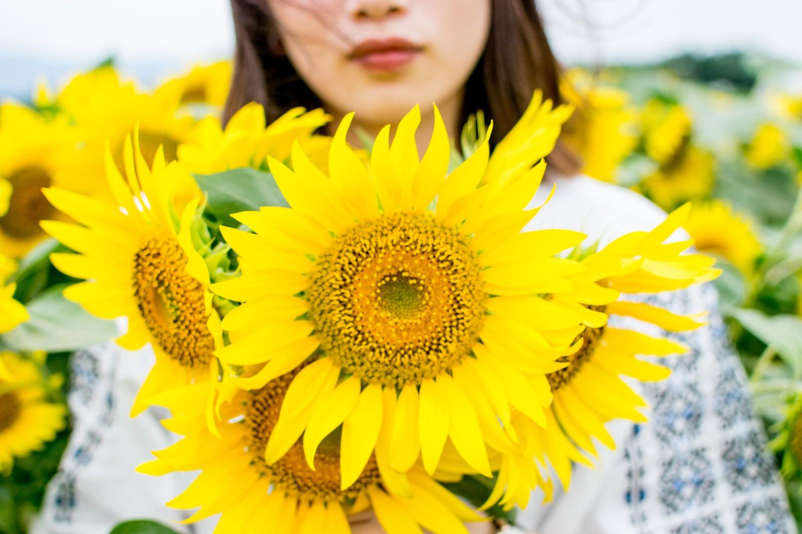 「向日葵畑の中で花を持った女性」の写真