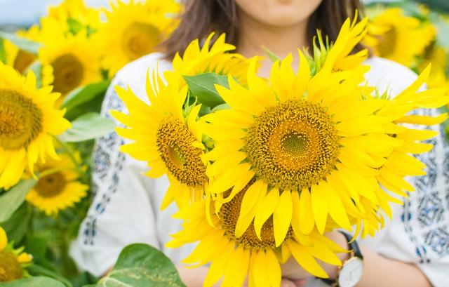 向日葵に囲まれる女性の写真