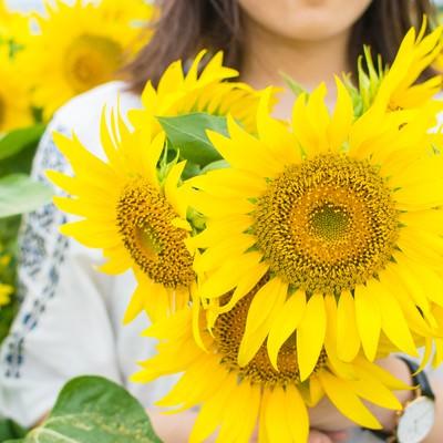 「向日葵に囲まれる女性」の写真素材
