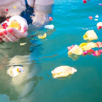 「水面に浮く鮮やかな花びらと女性の手」の写真素材