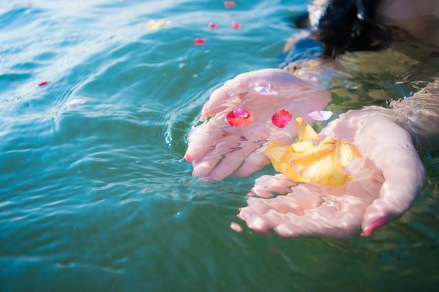 水面に浮いた花びらをすくいあげるの写真