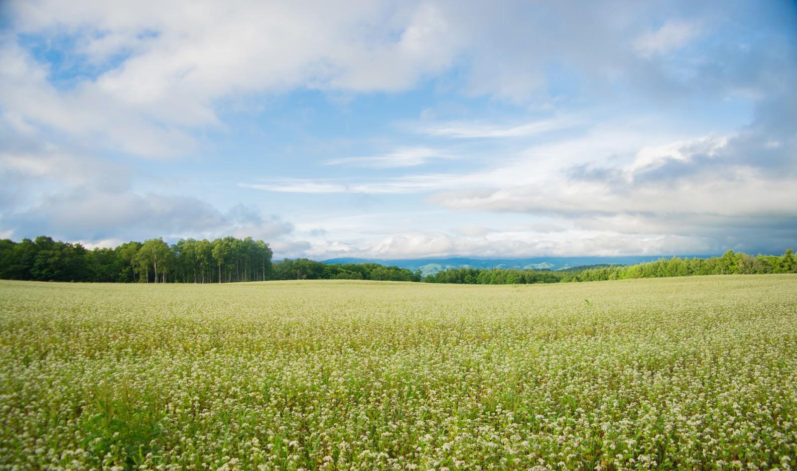 「広大に広がる畑の風景」の写真