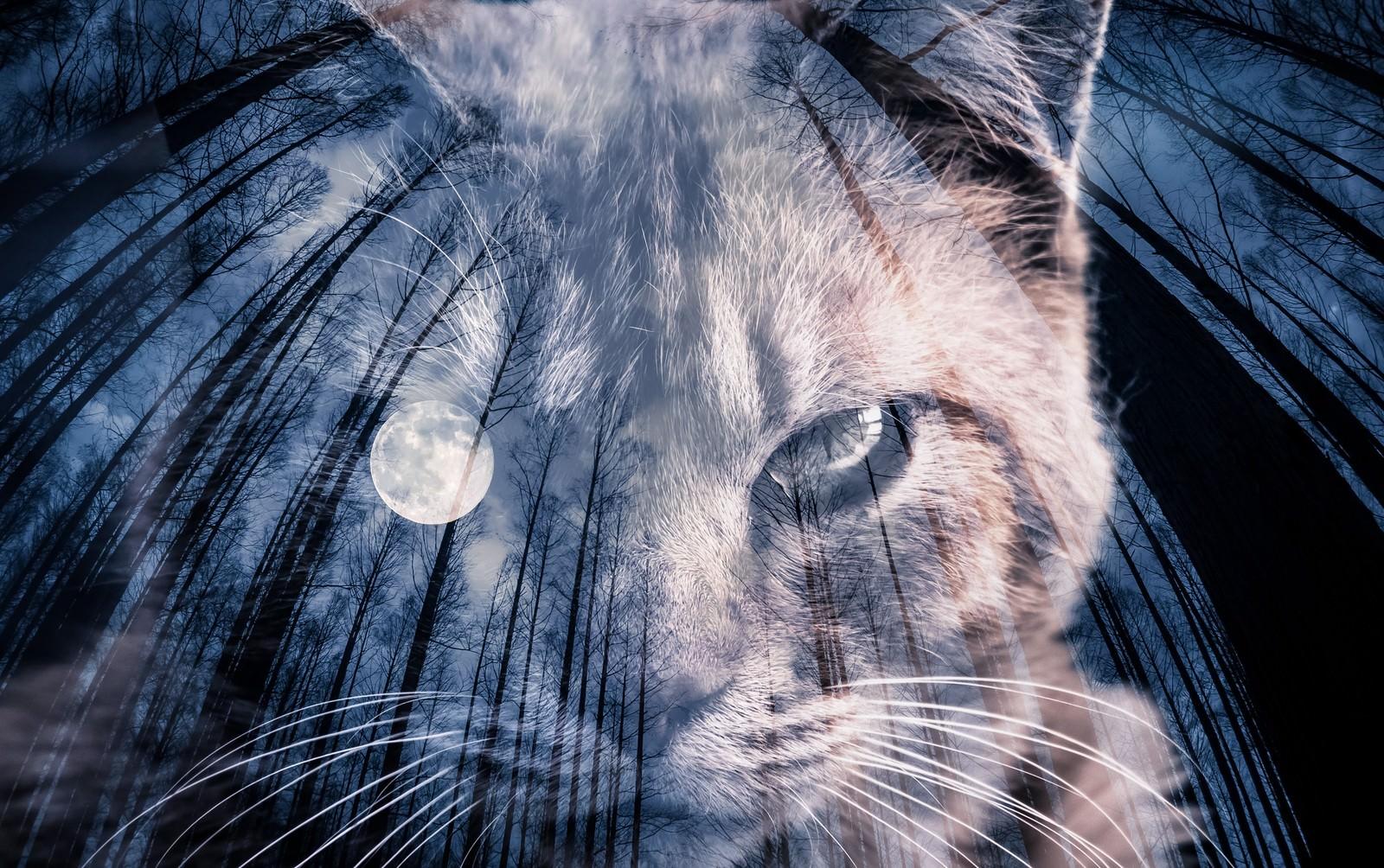 「満月と猫(フォトモンタージュ)」の写真