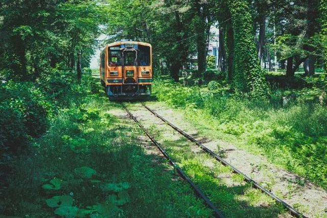 森のなかを走る1車両の電車の写真