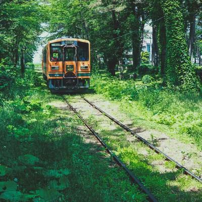 「森のなかを走る1車両の電車」の写真素材