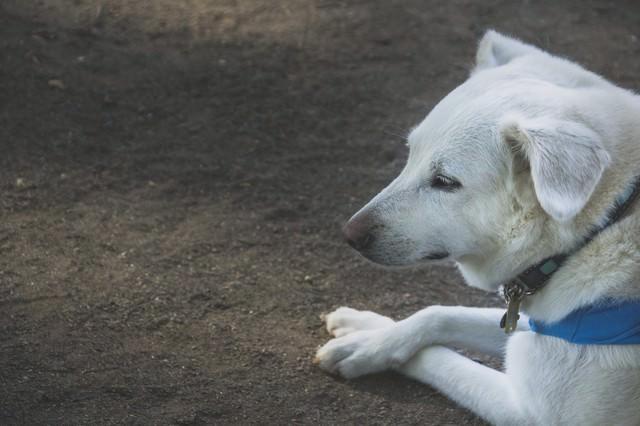 パブロフを諦めた犬の写真