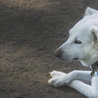 「パブロフを諦めた犬」の写真素材