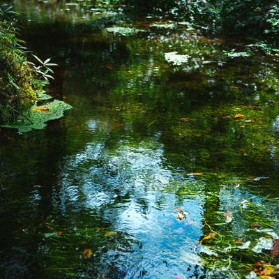 豊富に湧き出る「狩宿湧水」の写真