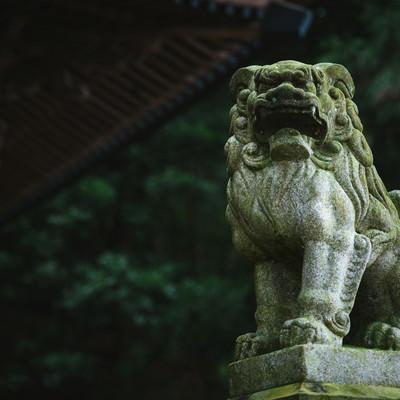「王城山神社」の狛犬の写真