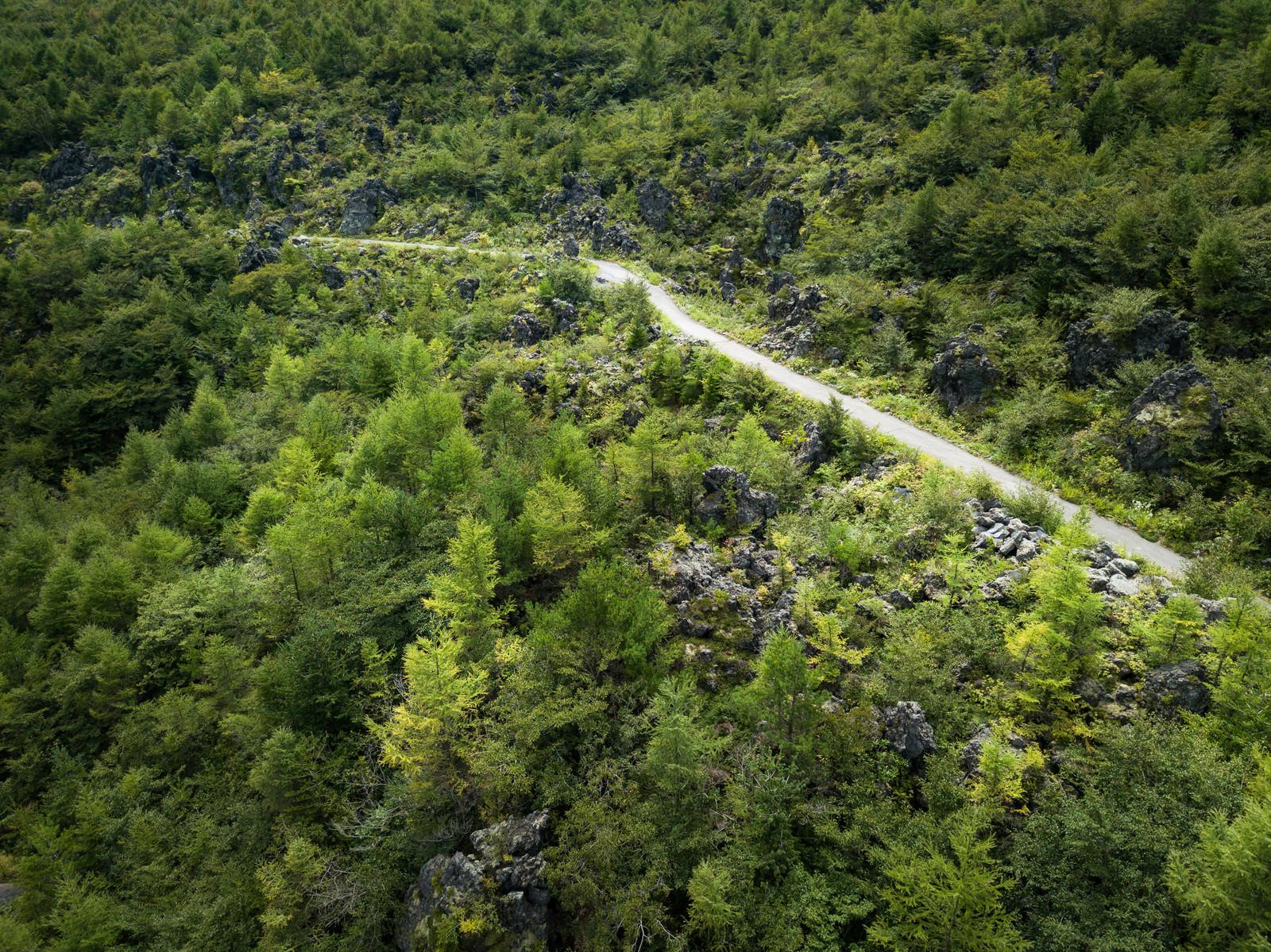 「浅間園の遊歩道と溶岩(鬼押出し)」の写真