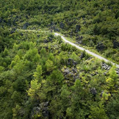 浅間園の遊歩道と溶岩(鬼押出し)の写真
