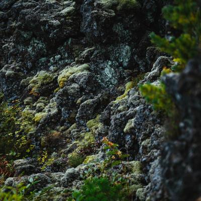 溶岩の上にできた苔の写真