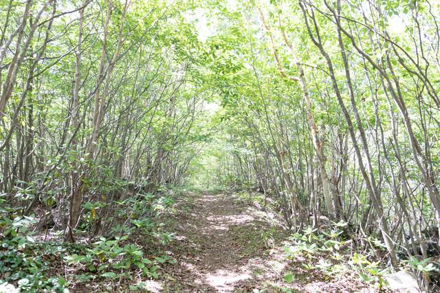 木々に覆われた山道の写真