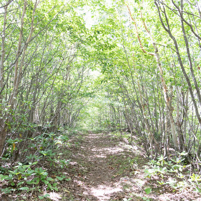 「木々に覆われた山道」の写真素材