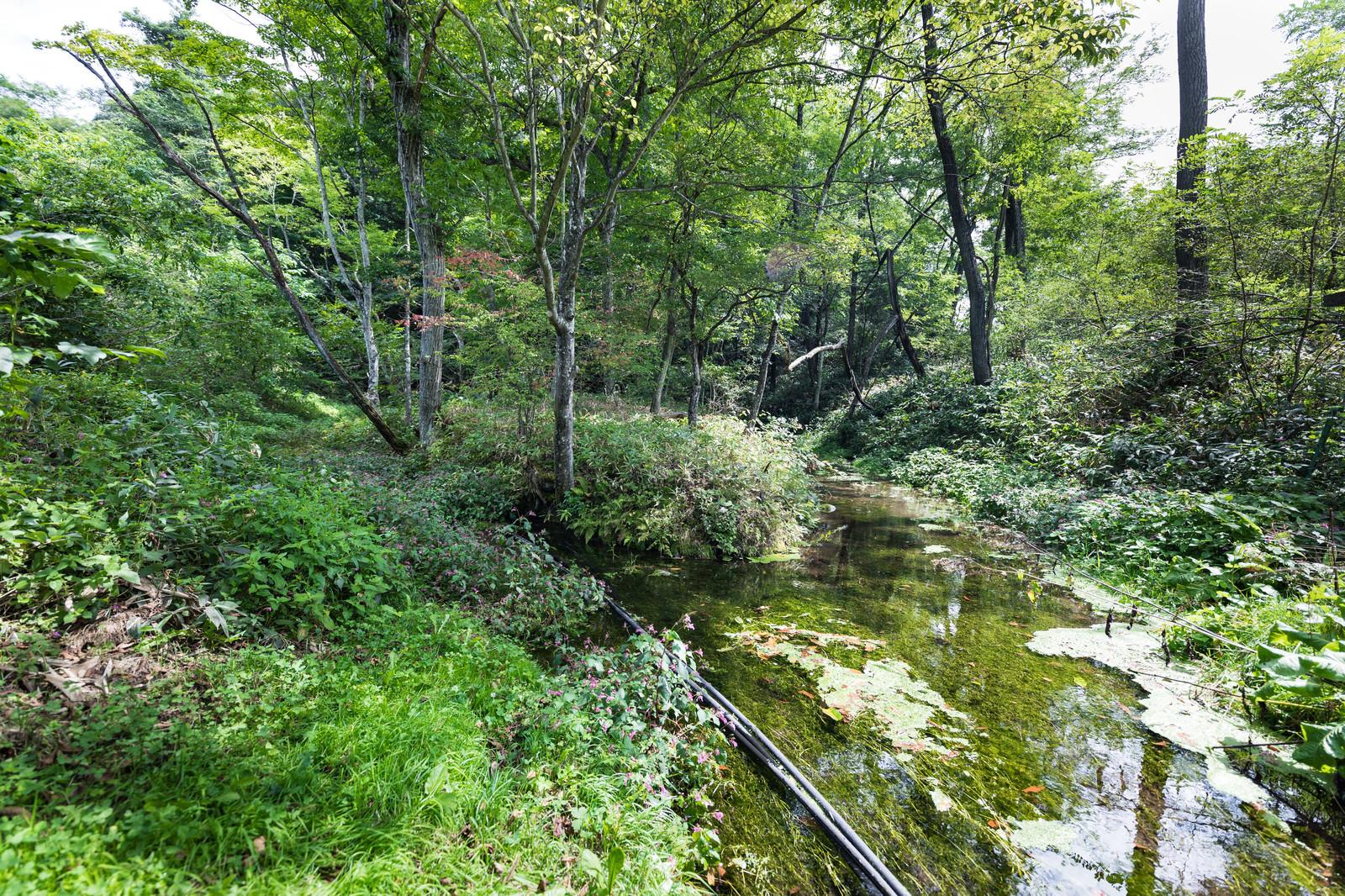 「狩宿湧水(長野原町)」の写真