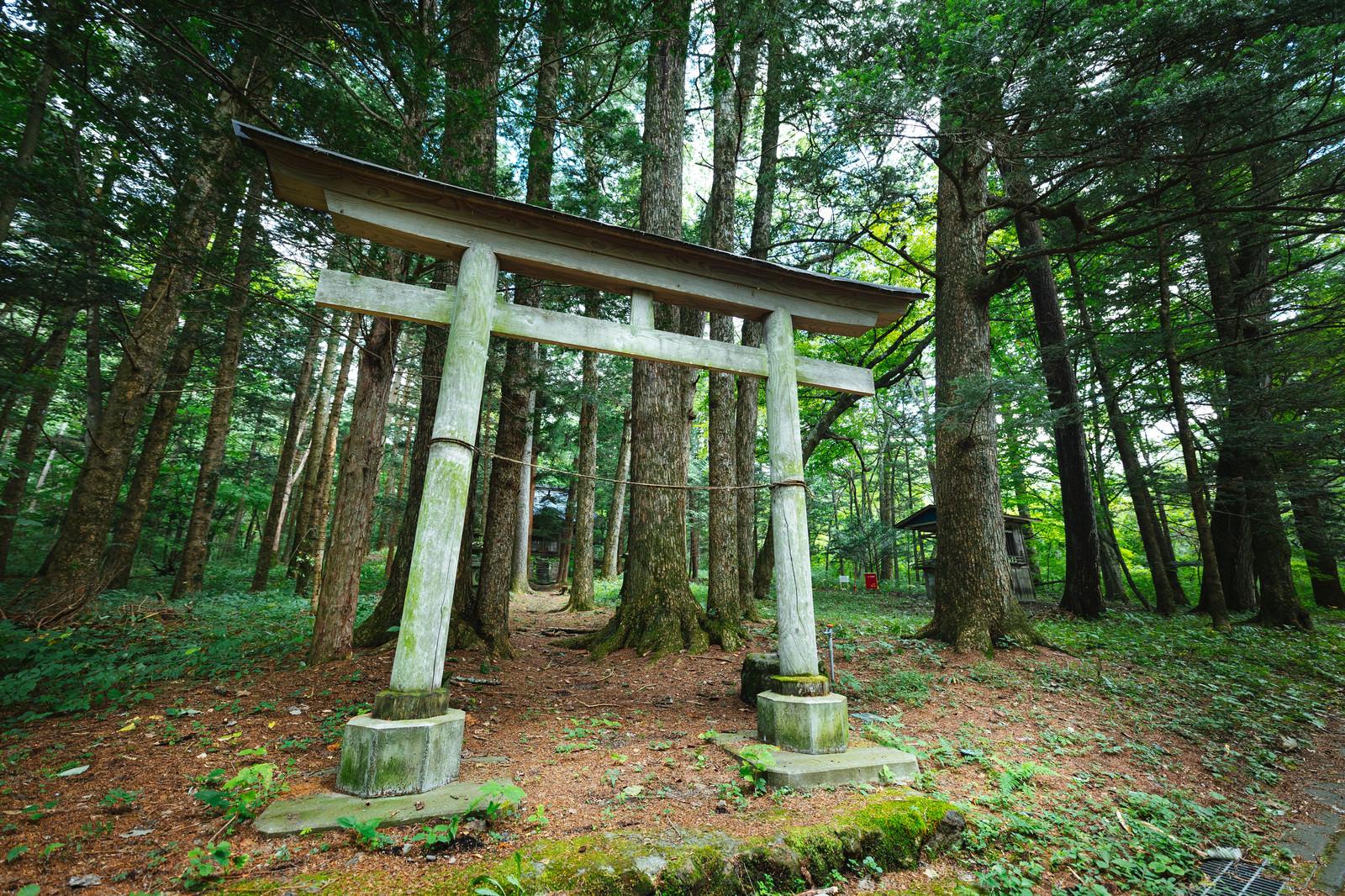 「狩宿諏訪神社の鳥居」の写真