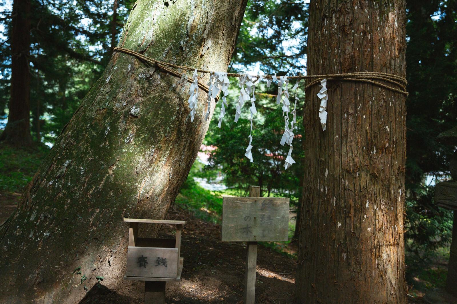 「応桑諏訪神社の「縁結びの木」」の写真