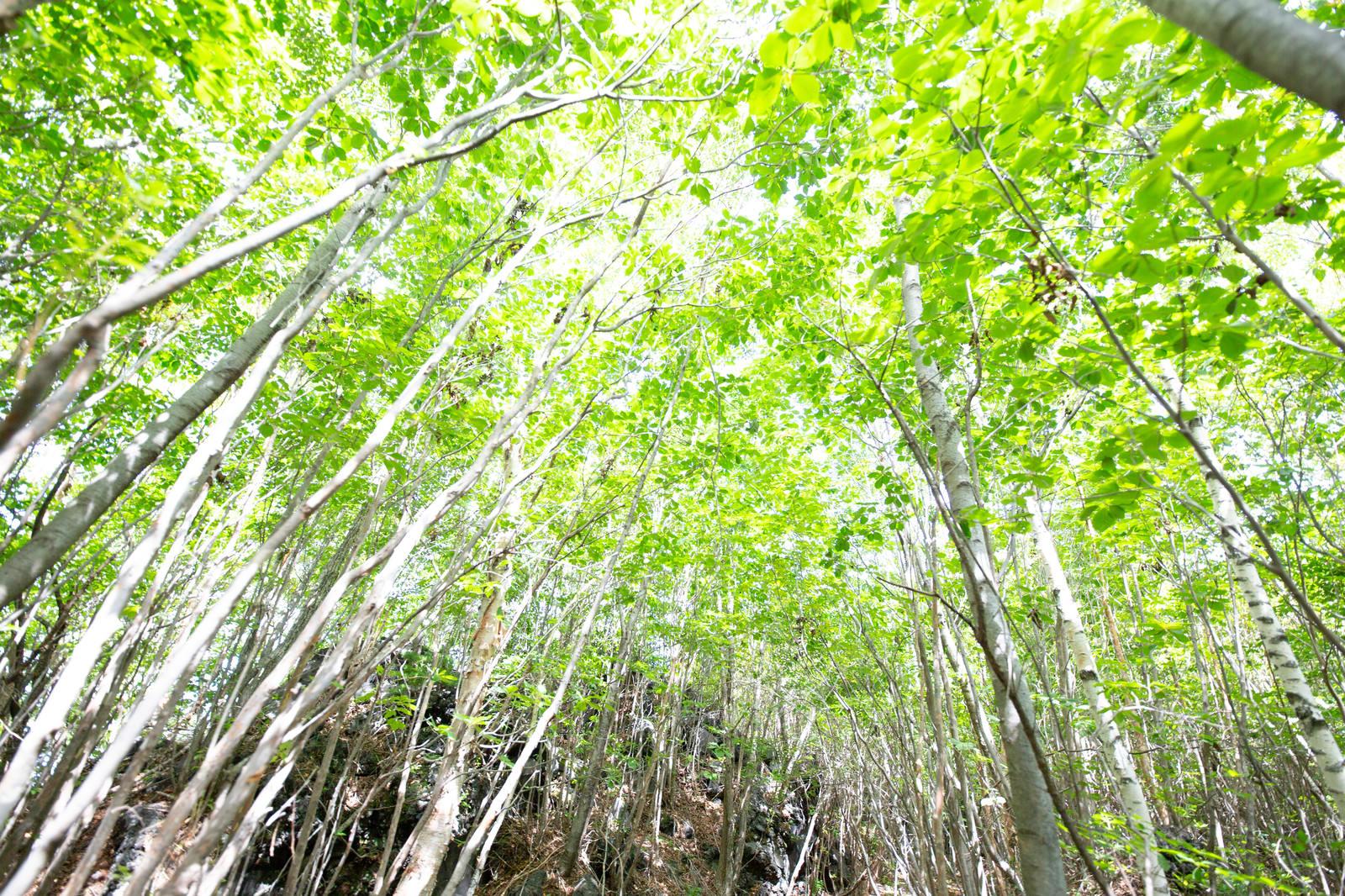 「新緑の木々」の写真