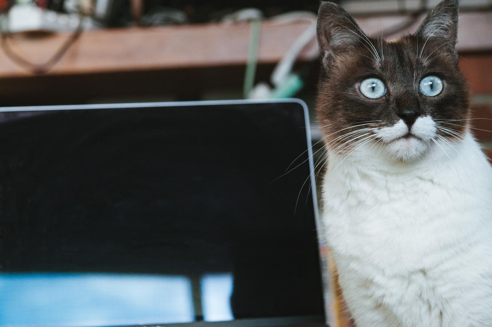 使用Macbook搜尋網頁的貓咪圖片|SEO優化|達內教育