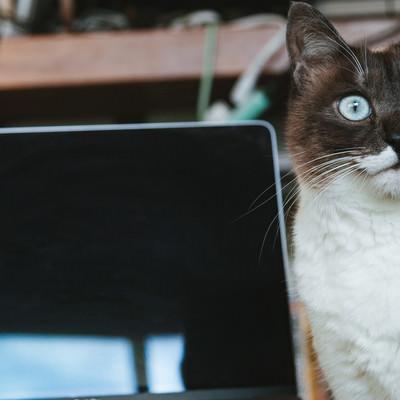 何もしていないのに再起動した時の猫の写真