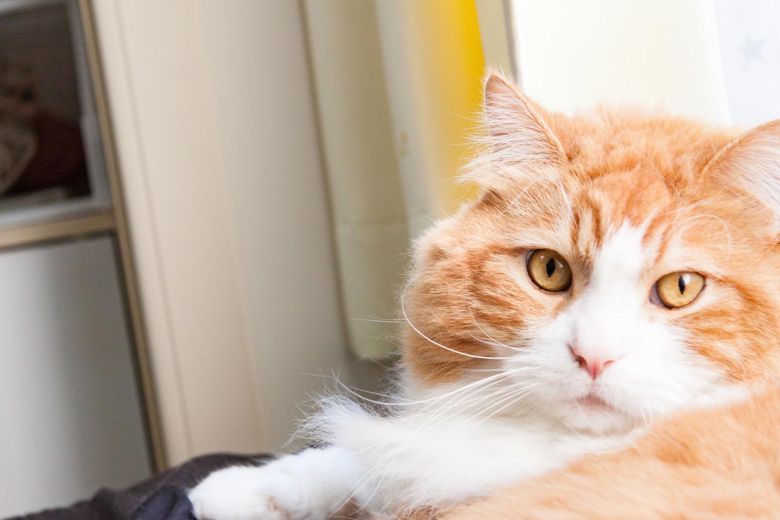 「いたずらがバレて振り返る猫」の写真