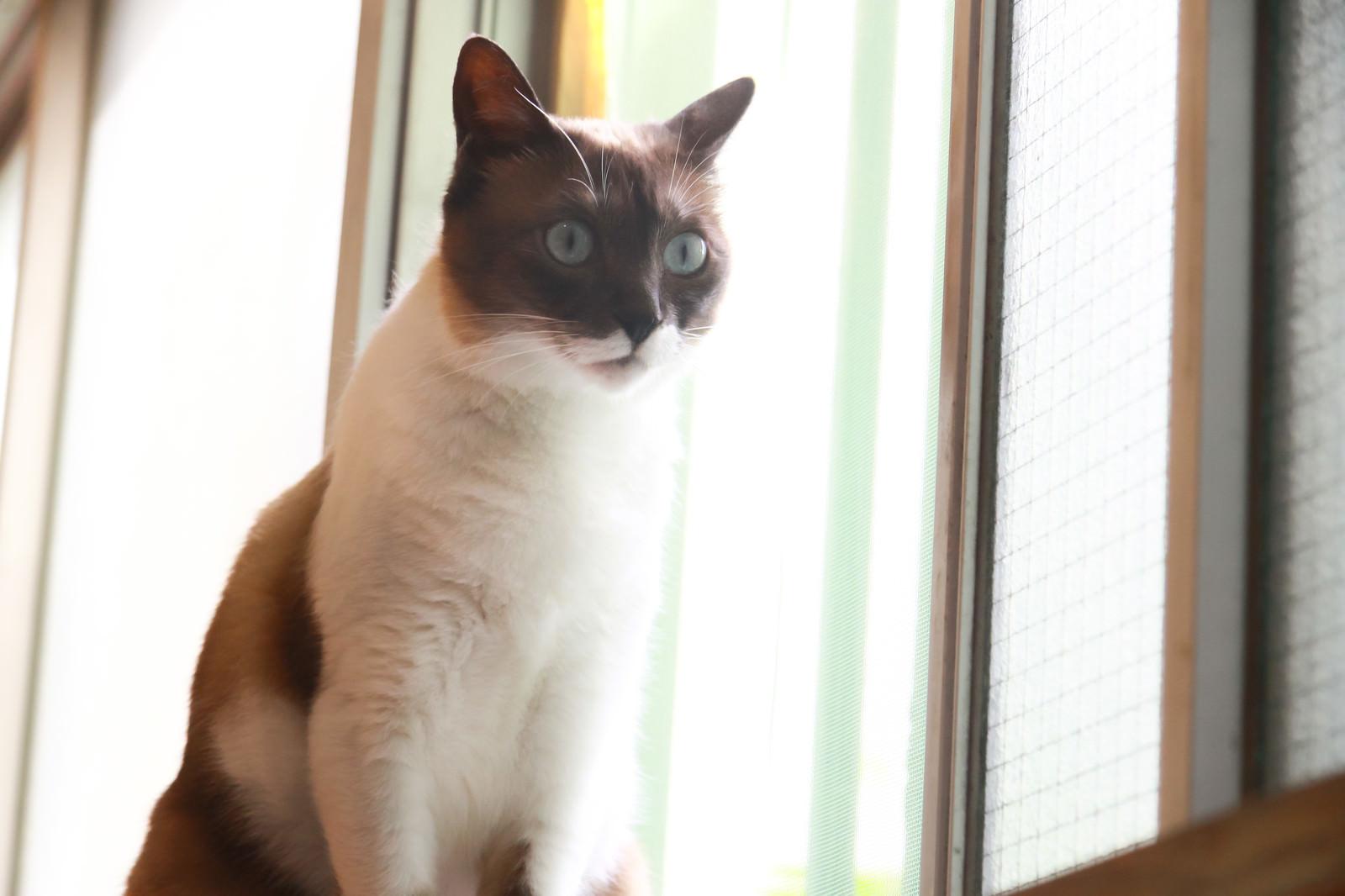 「えっ!?知らされてないんだけど猫」
